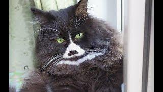 Благородный кот не бросил возлюбленную, а всячески помогал ей выжить, заМУРчательная любовь!
