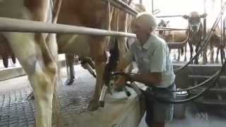 Newman's Qld: Struggling dairy farmers seeking opportunities to export milk to Asia