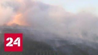 В Чернобыле горит рыжий лес - наиболее пострадавшая при аварии на АЭС зона - Россия 24