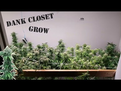 ORGANIC CANNABIS GARDENING. VEG & FLOWER INDOOR HOME GROW. להורדה