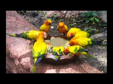 YELLOW BIRD~Goombay Dance Band