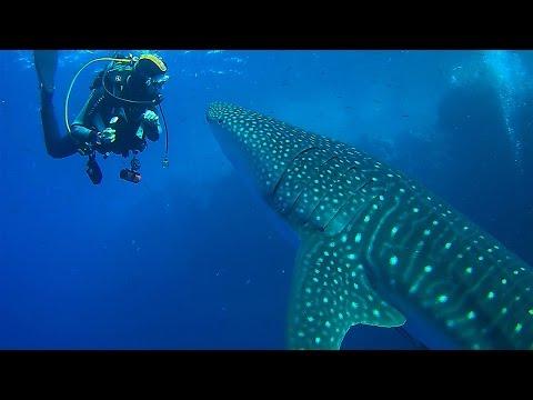 Blue Waves Tauchsafari 2014: Daedalus Reef; Wale Shark & Captain Maher
