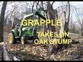 John Deere 3038E (tractor & grapple IN ACTION) taking on an oak stump
