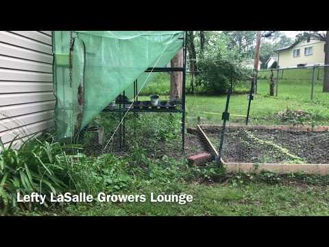 Benefits & Beauty of outdoor grow