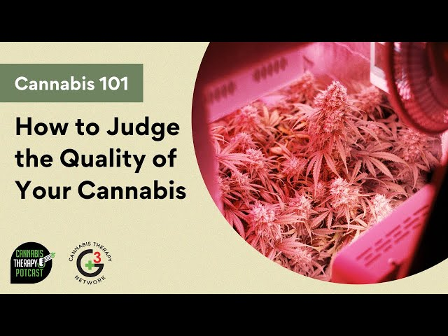 How To Judge The Quality Of Your Cannabis