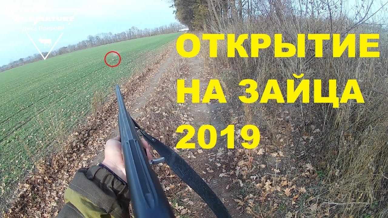 Открытие охоты на зайца 2019