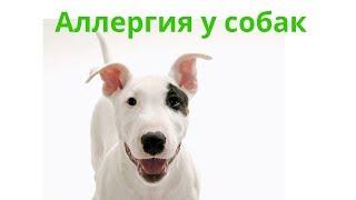 Аллергия У Собак & Как Выявить Аллергию У Собак. Ветклиника Био-Вет