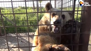 'Saddest Bears' In Europe Are Finally Free