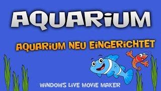 54 Liter Aquarium Neu Eingerichtet  | Mediaroyal
