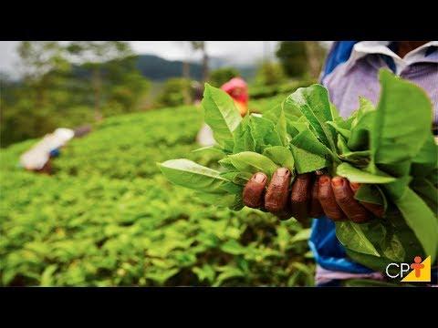 Clique e veja o vídeo Curso a Distância Plantas Medicinais e Aromáticas - Colheita e Beneficiamento CPT