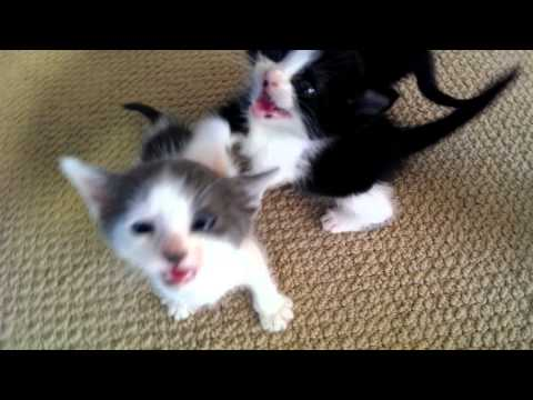 Hungry, hungry kittens