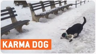 Instant Karma | Dude Slips On Ice