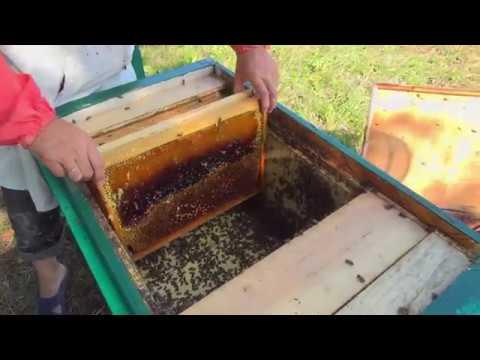 Последняя откачка меда. Подсолнечный мед. Качка меда. Выездная пасека.Мед 2019 года.