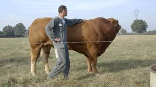 Histoire Métiers - Frédéric, éleveur de bovins