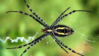 Anggun C. Sasmi - Laba Laba (Official Lyric Video)