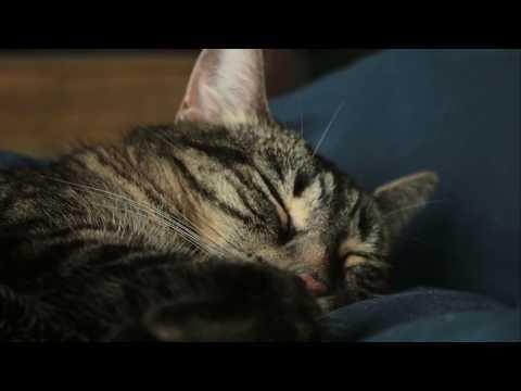The sleeping cat documentary
