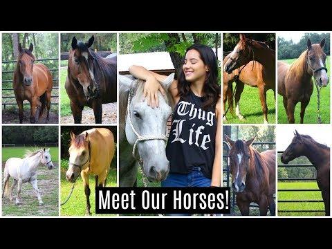 Meet My Horses!