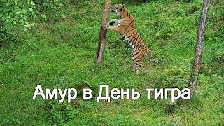 Амур в День тигра