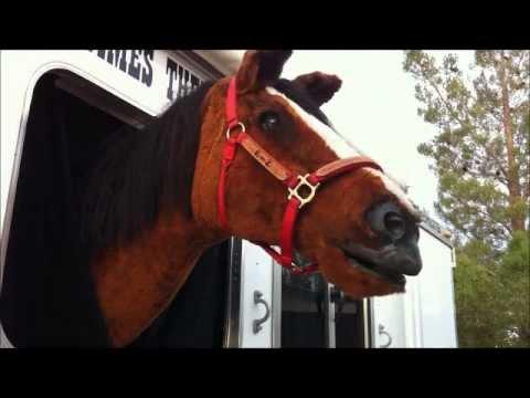 E-Z the talking horse 001