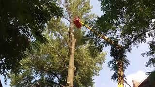Спил дерева на подвязке...