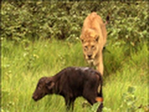 Surprise Kill -The Last Lions Deleted Scenes