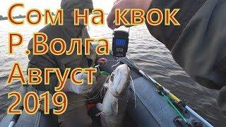 Сом на квок/ Волга / Август 2019