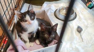 История замерзающих котят найденных в лесу animal shelter kitty rescue history