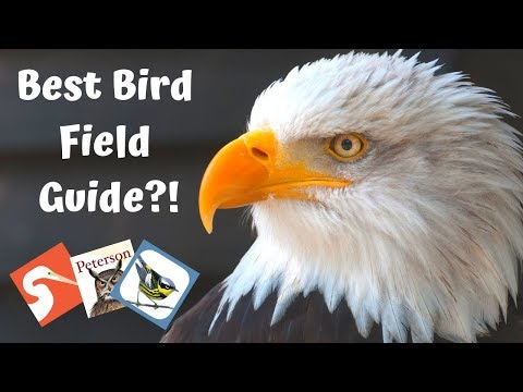 Best Bird Field Guides | Birds Of North America