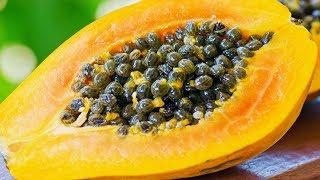 केवल चार दिन पपीते के बीज खाइए, फिर आपके साथ जो होगा वो खुद ही देख लीजिये Eating papaya seeds