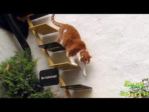 Лестница своими руками для кошки лестница
