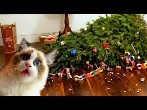 Funny Cats vs Christmas Trees , Funny Cats Christmas Compilation