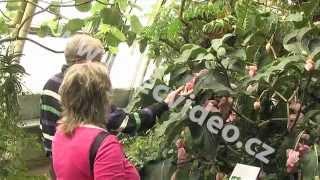 ČR - Praha - Botanická zahrada Troja - motýli