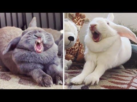Sleepiest funny bunny just got a cute friend | Bored Panda Animals