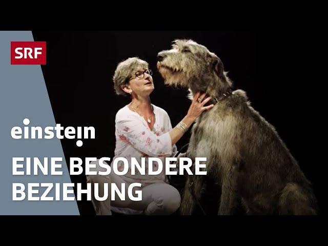 Mensch und Hund – eine einzigartige Freundschaft | SRF Einstein