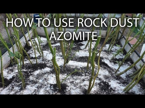 Side dress your plants with Azomite Rock Dust to remineralize soil