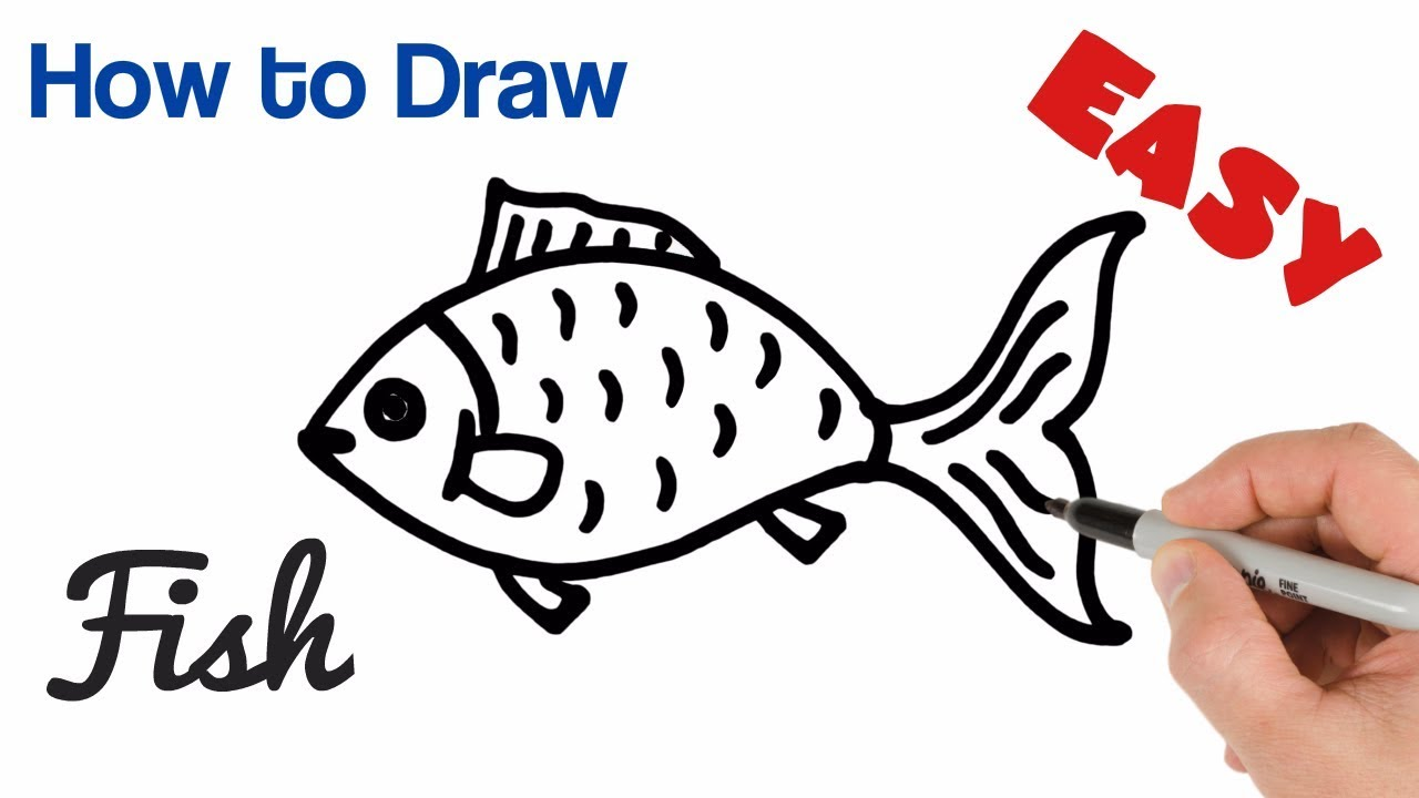 How To Draw A Fish Easy Step By Step Youtube