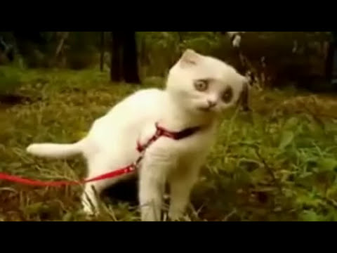 Chat Qui Fait Peur scary cat le chat qui fait peur lol cat - youtube