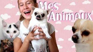 5. Je vous présente mes animaux