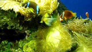 clownfish at the audubon aquarium of the americas