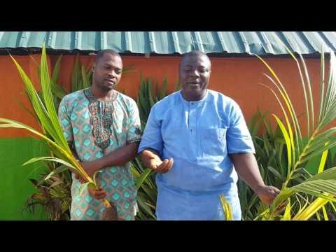 Nigeria Dwarf Coconut