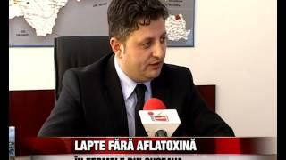 Lapte fara aflatoxina in fermele din Suceava