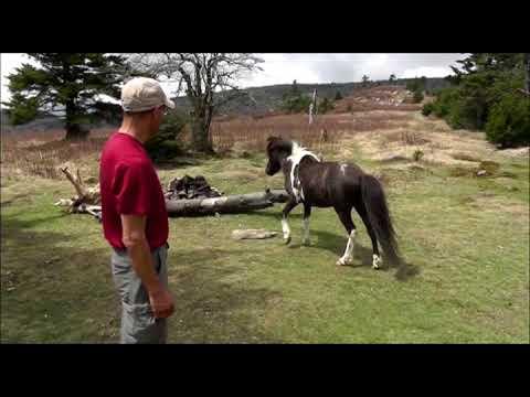 Appalachian Trail/Mt Rogers Hike - Big Foot