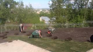 Укладка рулонного газона в Саратова - ООО