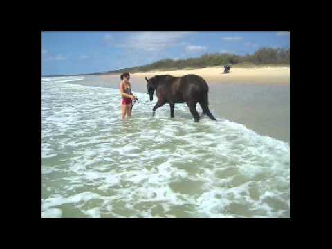 My horses on the beach playing in the water youtube my horses on the beach playing in the water sciox Images