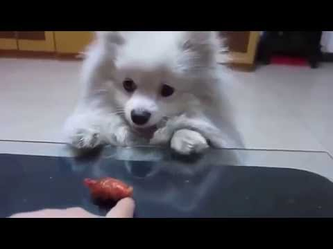 Funny Videos - Funny Cats - Funny Babies Laughing - Funny Animals Videos - Funny Dogs 2015