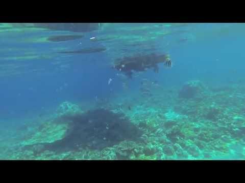 Swimming with dolphins 01 : Ogasawara 小笠原 07/2013