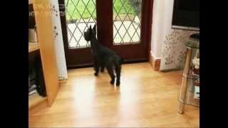 Двери для собак и кошек усиленной конструкции Staywell