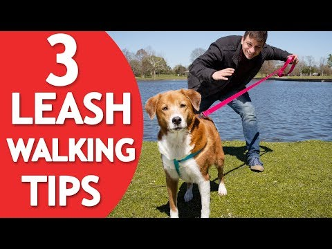 3 Things Your Dog MUST Know to Walk Nicely on Leash