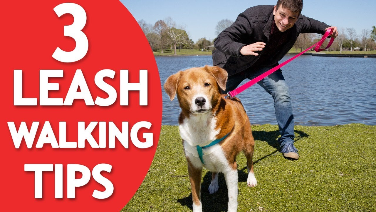 5 Reasons a Leash Keeps Your Dog Safe picture