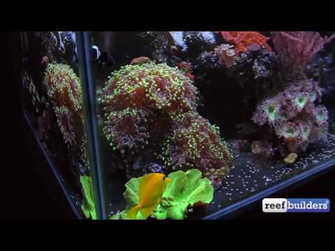 My 'Zero' Maintenance Reef Tank